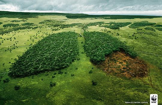 adena-pulmones-verdes